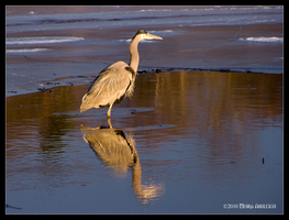 Heron in the Late Afternoon by Mogrianne
