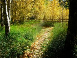 Autum Yellow Woods by Sing-Down-The-Moon