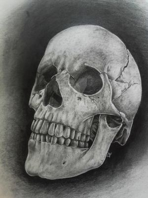 Realistic SKULL in graphite by AnniePad