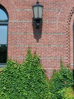 brick wall with ivy stock by WKJ-Stock