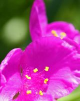 Summer Brightness by neaters2000