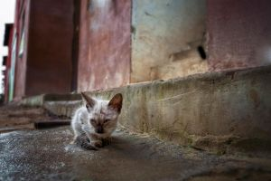 wild life for a kitty by poivre
