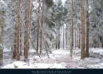 Winter Forest with Fog 01 by kuschelirmel-stock