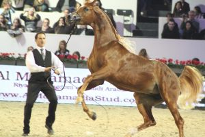 Salon du cheval 2012 by Citron--Vert