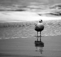 gull by the sea by awjay