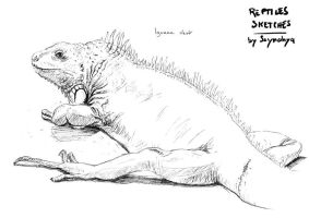Iguana live sketch by Ssynahya