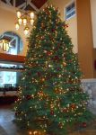 Clubhouse Tree... by smfoley