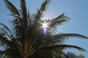 Through the palm leaves by oconpo0