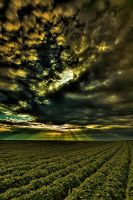 Gods Crop by SteOS