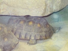 Slow And Steady by LMonicG1983