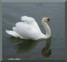 The Dirty Swan - I by Aswang301
