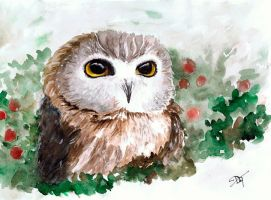 My little owl by RiaDar
