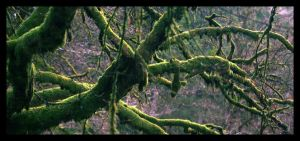 Mossy Moss Moss by Dimitri86