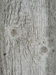 WOOD TEXTURE 10 by gatorstock