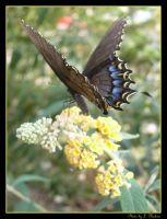 Butterflys Everywhere Photo 4 by PoohBear1969