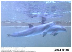 Two Dolphins by Della-Stock
