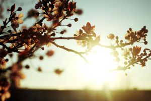 Welcome Back, Spring by MisterPoulpe