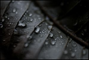 waterdrops on a leaf by fragilemuse-org