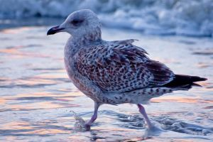 seagull3 by GerbenT