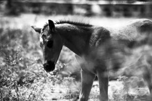 Young horse born in April 3 by Philatx