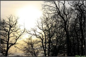 Cold Wintersun by Clu-art
