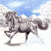 Arctic Stallion by SabrinaJenema
