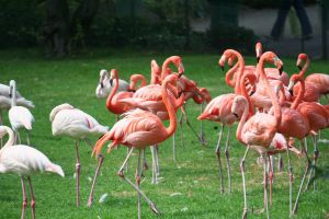 flamingos in cologne Zoo by ingeline-art