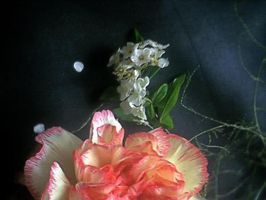 Petals are dreamy by pattsy