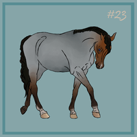 23 Bay roan by EquineRibbon