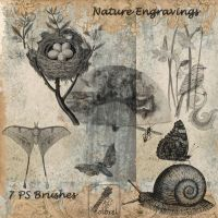 Nature engravings PS brushes by libidules