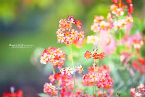 Splash of Colour - Day 126 by rosannabell
