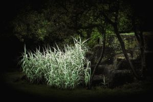 The bewitched bush by OlivierAccart