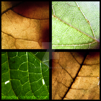 Four Corner Life - Leaves by Renacido