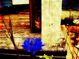 Vintage Porch by nelsonpray