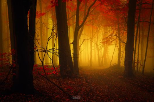 -Opening of the new dimension- by Janek-Sedlar