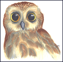 Northern Saw-Whet Owl by therougecat
