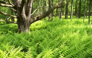 The Ferns by Dysturbed7