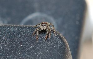 Jumping Spider 1 by WickedOne6666
