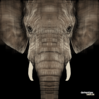 Elephant by dankershaw