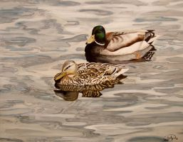 Mallard pair by Rhed-Dawg
