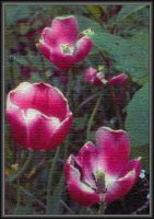 Painted Tulips by Tailgun2009