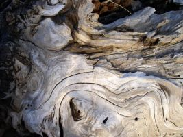 Texture - wood 4 by SanStock