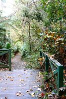Forrest Path Stock 6 by CNStock