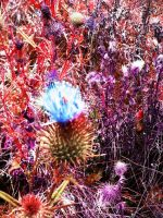 party in the thistles by angelazilla