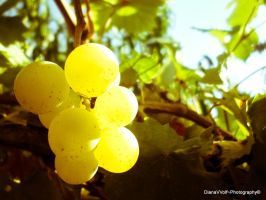 Grapevine by DianaVVolf