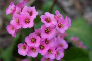 Pinkish-Purple Flowers by greenwalled1