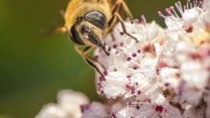 Hoverfly 2 by Light-Lein