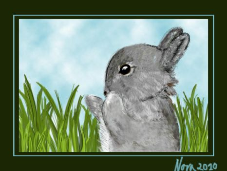 A bunny by jubi