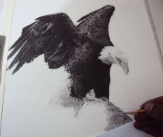 Bald Eagle in progress by Marcosjunior