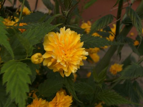 unknown flowers'' by ArianaE